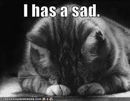cat I has a sad