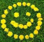 dandelion smily