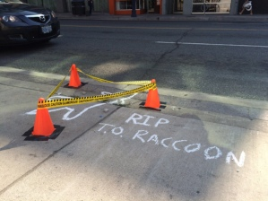 A makeshift crime scene is set up on Church Street, where a dead raccoon was found and left for over 13 hours before being picked up by a city worker in Toronto on Friday, July 10, 2015. width=