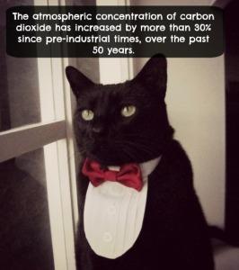 cat climate change