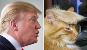 donald-trump and farley