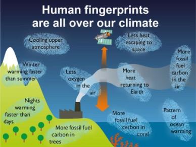 human_fingerprints_450
