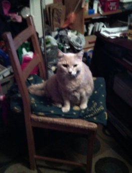 Farley on chair March 2017