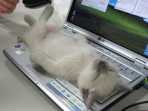 kittyon-a-keyboard