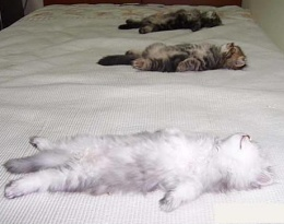 cat speedbumps