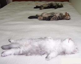 cat speedbumps