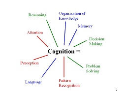 Cognition Equals