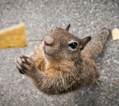 squirrel begging