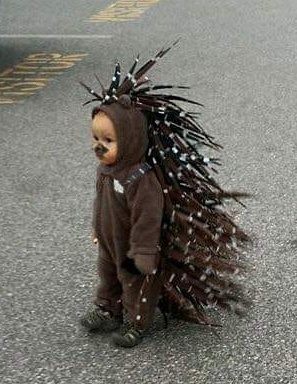 hall 2018 baby porcupine