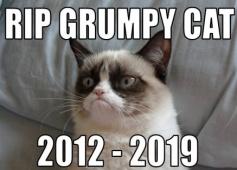 grumpy cat RIP
